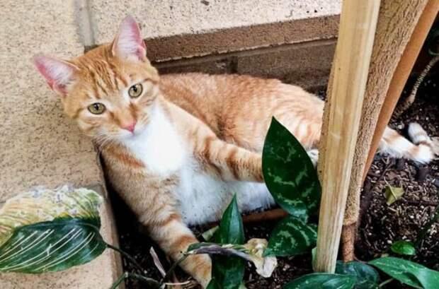 В США кот Кевин за полтора года путешествия преодолел четыре тысячи километров