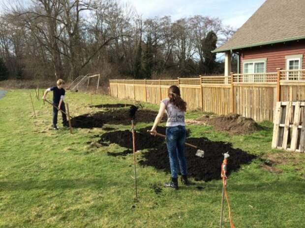 При необходимости проведите улучшения состояния почвы в саду