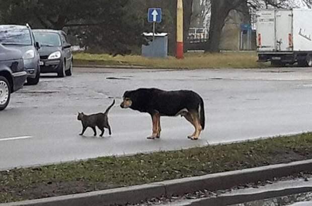 Портовый пес впал в депрессию и заболел из-за разлуки с подругой-кошкой