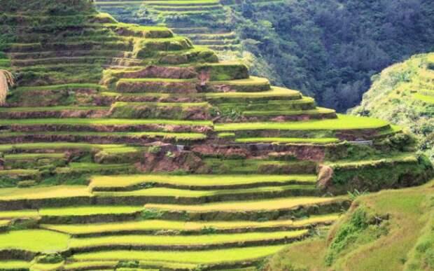 Рисовые террасы в Филиппинских Кордильерах