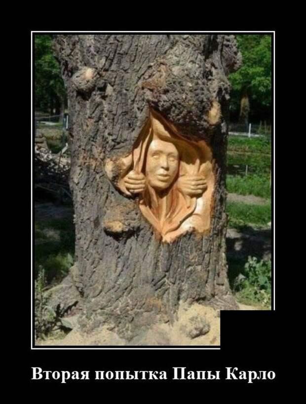 Демотиватор про деревья