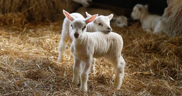 Самые милые животные 2015 года