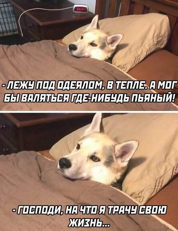Мысли в постели