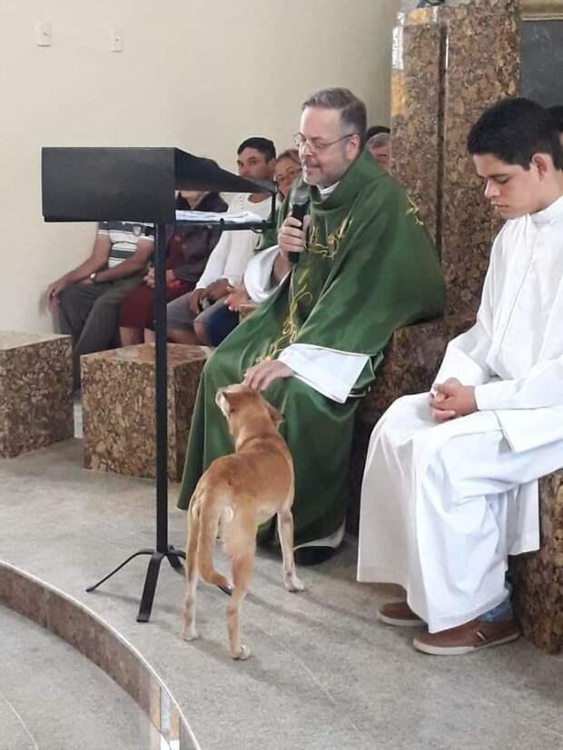 Добрый священник приводит бездомных собак в церковь – чтобы они нашли новые семьи