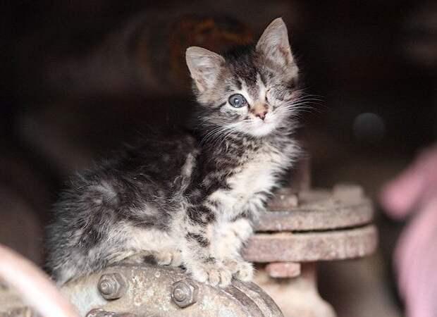 Стих о бездомном котенке...Берет за душу...Задумайтесь!