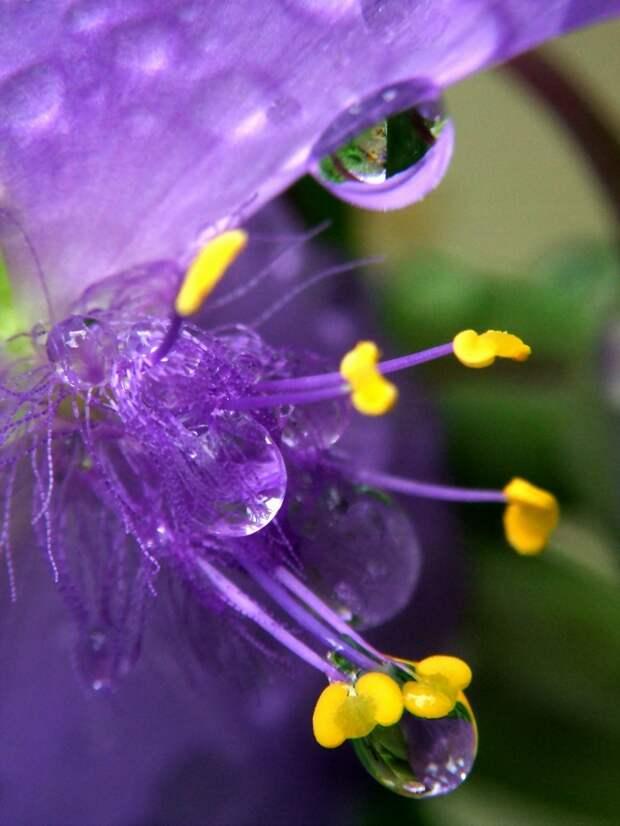 Цветочный калейдоскоп: удивительная красота!