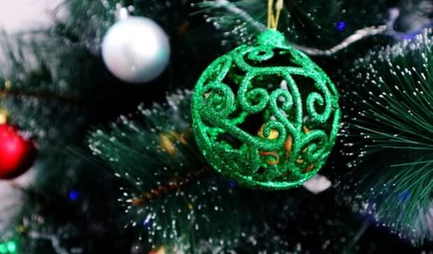 Тагильчане могут подарить новогодним елкам «вторую жизнь»