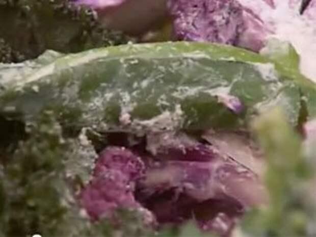 Цветная капуста во фритюре — Рецепты Джейми Оливера