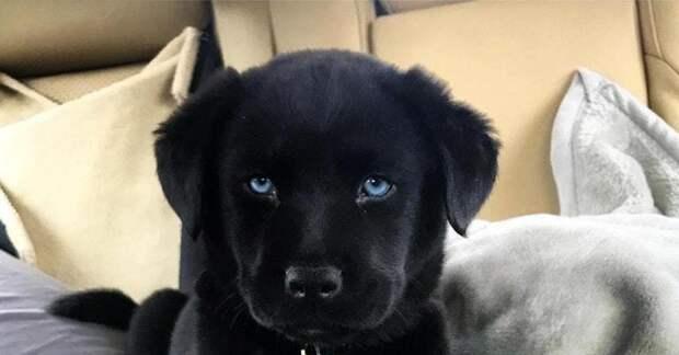Фотографии собак, которые любого котолюба собьют с пути истинного