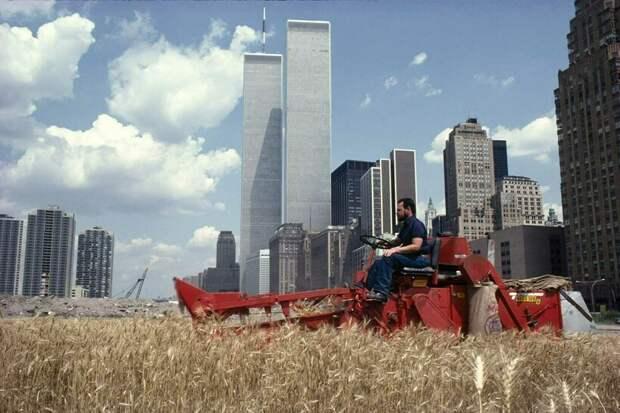 12 снимков о том, как в 1980-х годах в центре Манхэттена появилось пшеничное поле