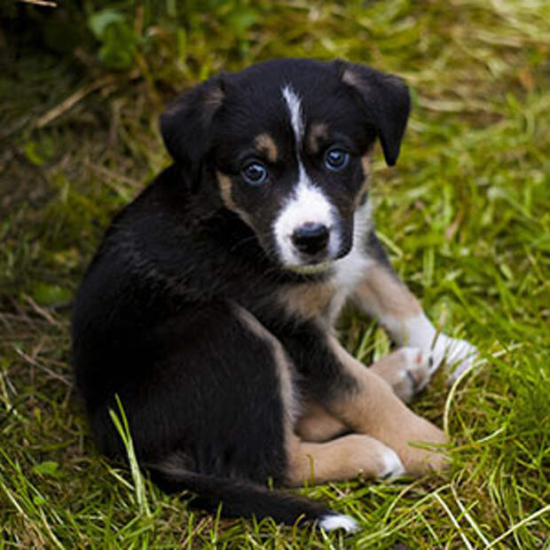 Хочу щенка