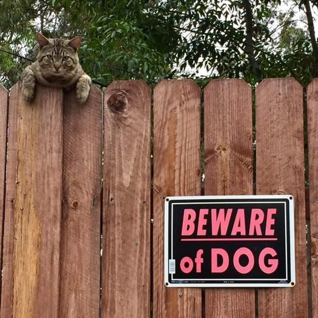 13. Осторожно, голодный Мурзик! животные, кошка, прикол, собака, табличка, умора, юмор