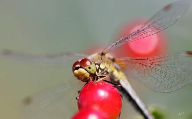 Интересное о насекомых насекомое, насекомые, описание