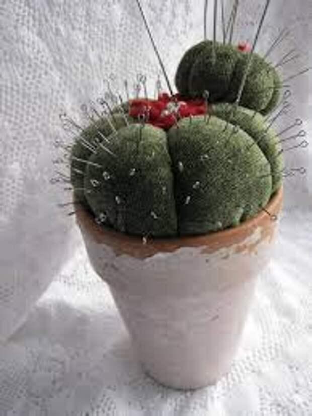 Игольницы-кактусы (подборка)