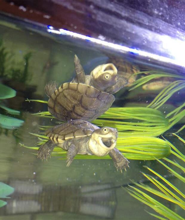 14. Невероятно забавная черепаха ниндзя, питомцы, черепахи