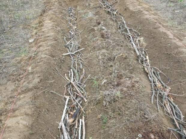 закладываем ветки в траншею: Органическое земледелие, пермакультура