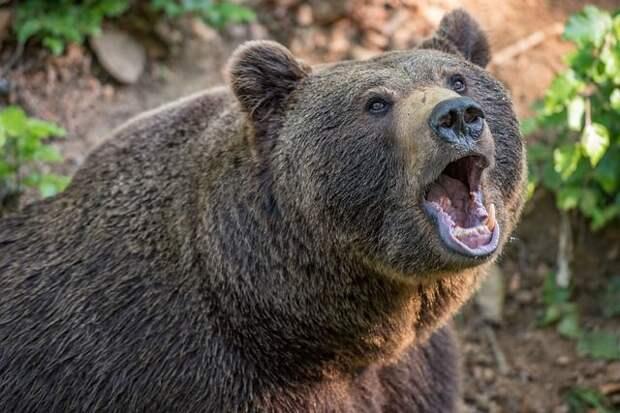 Медведь пришел к школе в сахалинском селе
