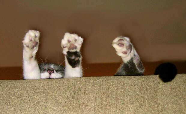 8.  кот, поза