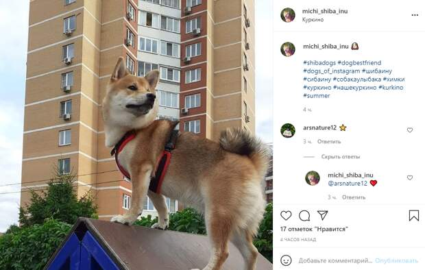 Фото дня: четвероногий блогер из Куркина покорил новые вершины