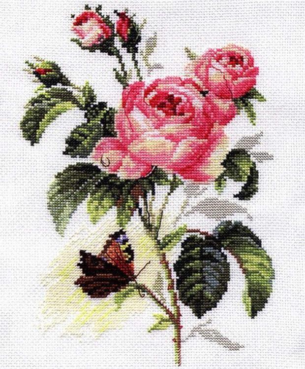 розы и бабочка1 (415x501, 338Kb)