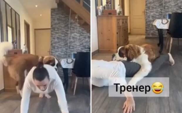 «Лежи и не вставай»: пес показал хозяйке самое эффективное упражнение