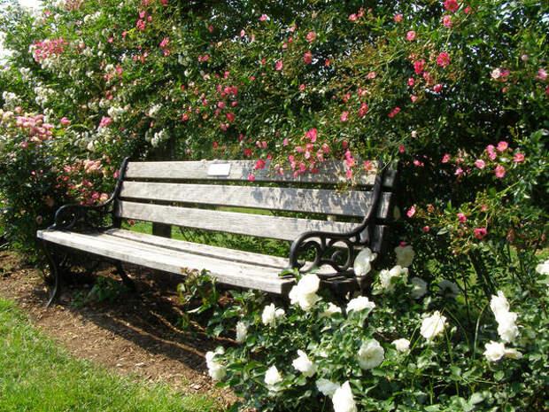 Роза - ключевое растение для романтического стиля