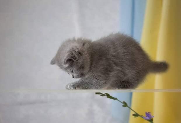Котята от фотографа Натальи Кузнецовой
