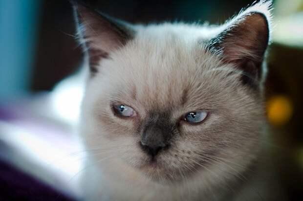 Кошки всегда вызывают улыбку!