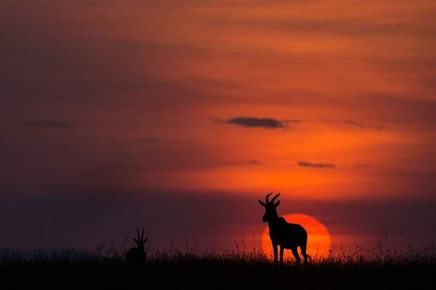 afrikanskie zakaty 15 Потрясающие африканские закаты от Пола Гольдштейна