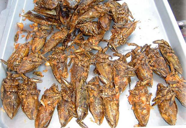 12 деликатесных съедобных насекомых