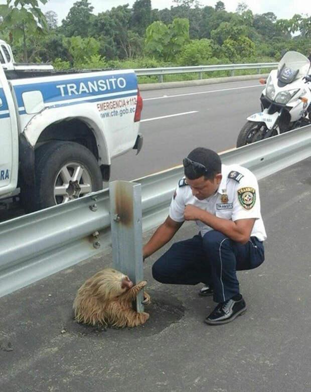 Спасение ленивца