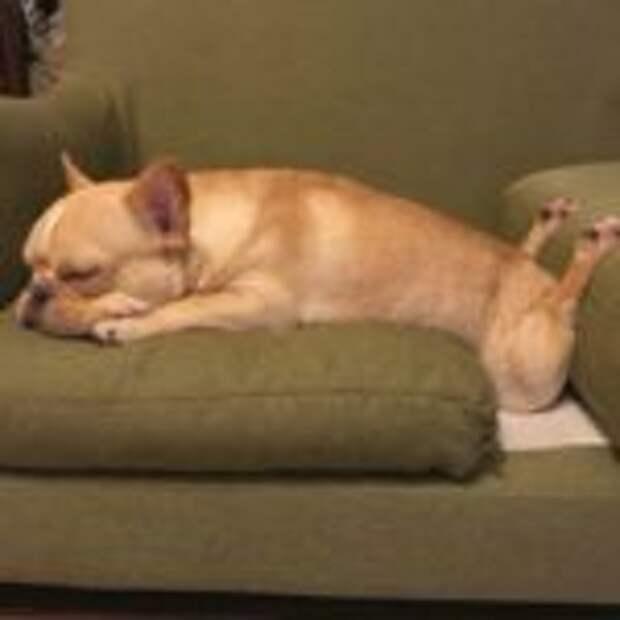 Не важно где и как, главное спать, доказано  собаками