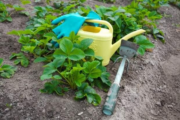 Чем можно обработать сад от болезней и вредителей ранней весной