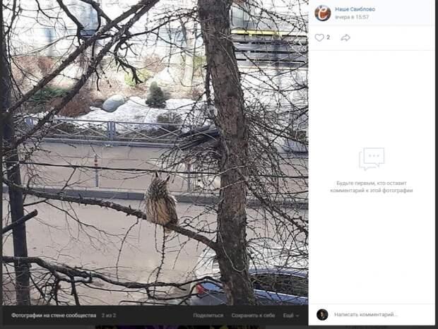 Фото дня: сова присела передохнуть на ветку в Свиблове