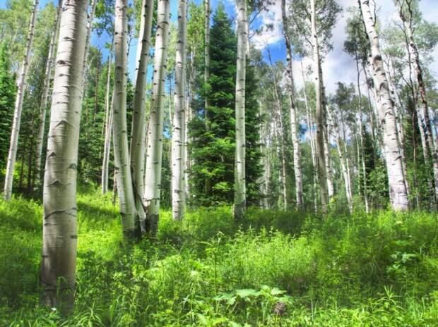 Скачать обои лес, деревья, природа бесплатно для рабочего стола в разрешении 5616x3744 - картинка 548593