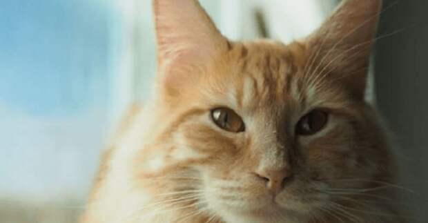 Неугомонный кот Тормунд и его ночные похождения под музыку