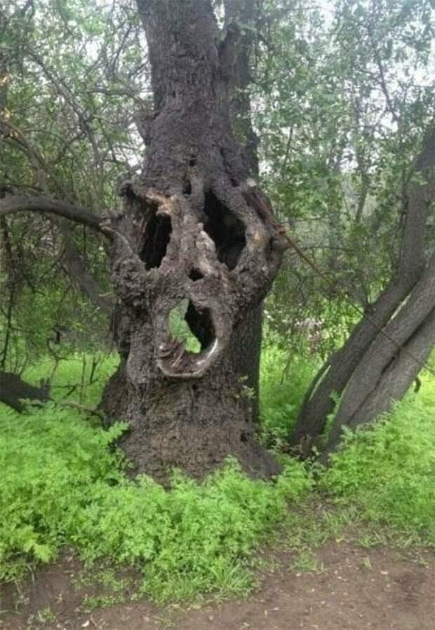 Дерево хочет что-то нам сказать