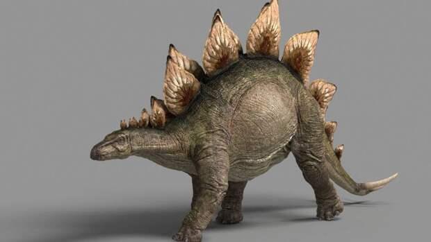 Палеонтологи обнаружили в Китае след стегозавра размером с кошку