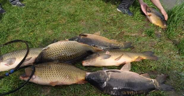 рыба как удобрение
