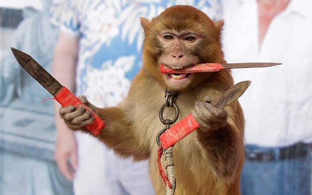 Вопиющий пример жестокого обращения с животными: дрессированные обезьянки из китайской деревни Баовань