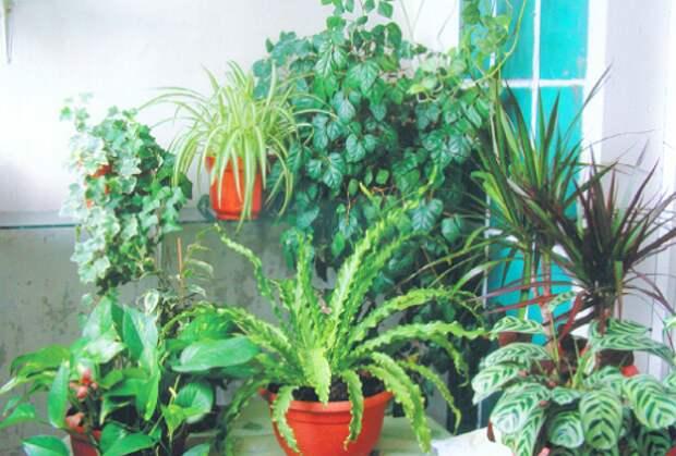 Цветы в доме. Как обустроить зимний сад на балконе