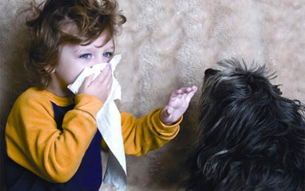 Какое домашнее животное завести аллергику