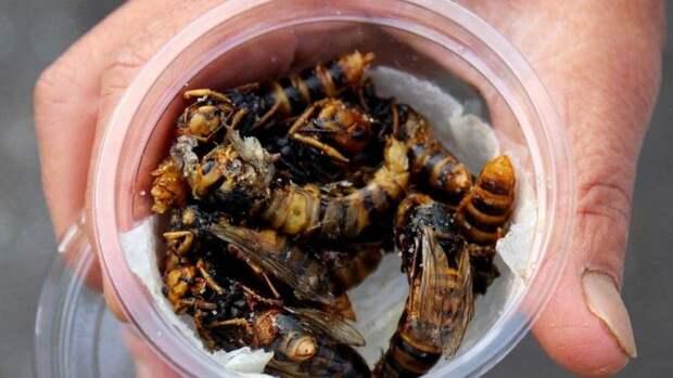 Жареные осы—деликатес японской кухни