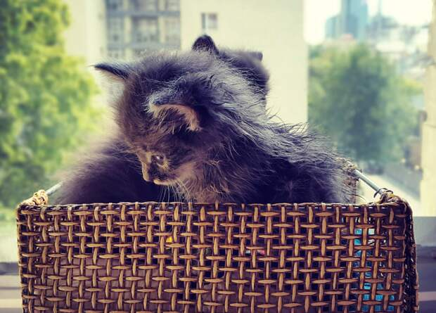 Семья взяла в дом сначала одного никому ненужного котенка, а вскоре нашла в парке коробку с тремя котятами