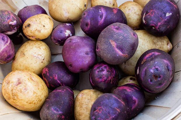 «Второй хлеб». Как развивается культура выращивания и потребления картофеля