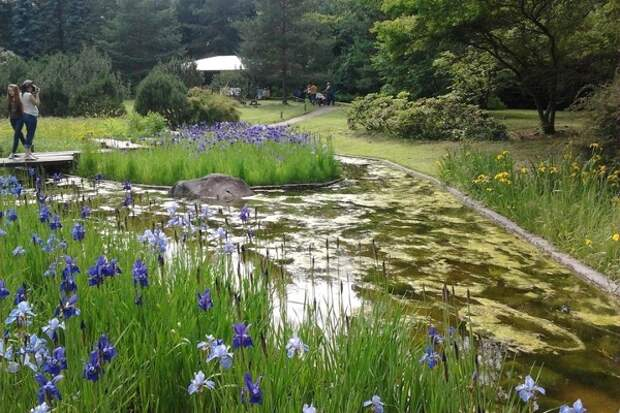Главный ботанический сад имени Н.В. Цицина