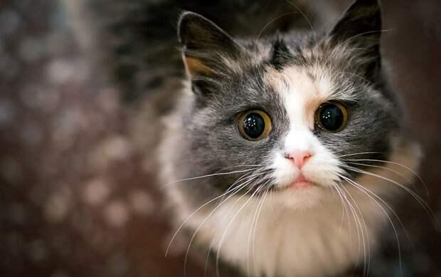 Кошки встречают хозяев после долгой разлуки