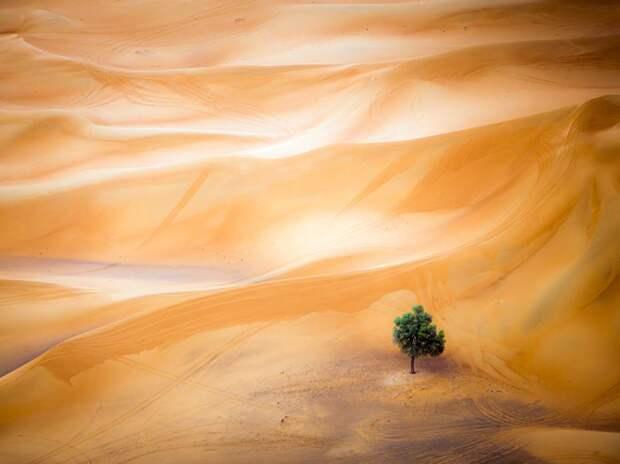 Одинокое дерево в пустыне в Дубаи