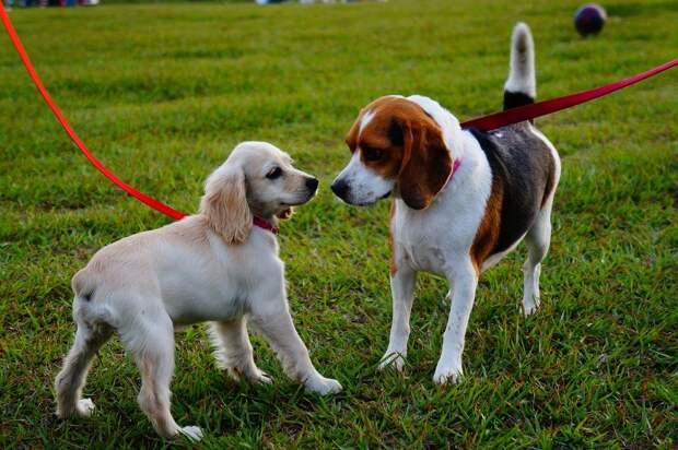 Выхино-Жулебино вошло в ТОП-10 районов для комфортной жизни с собаками