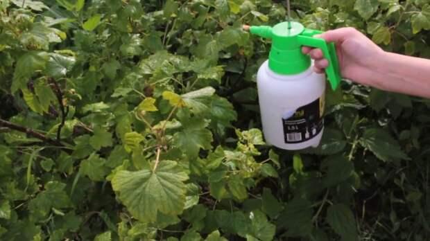 Обрабатываем теплой водой. |Фото: youtube.com.